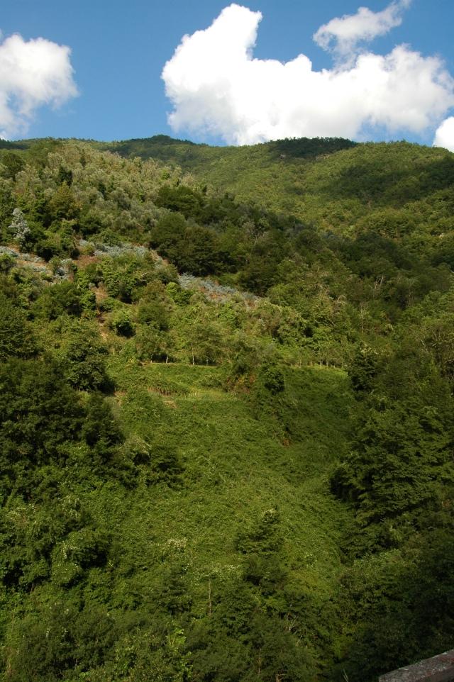 castelvittorio.colline
